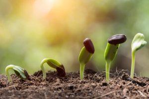 plantillas-creciendo-1024x681